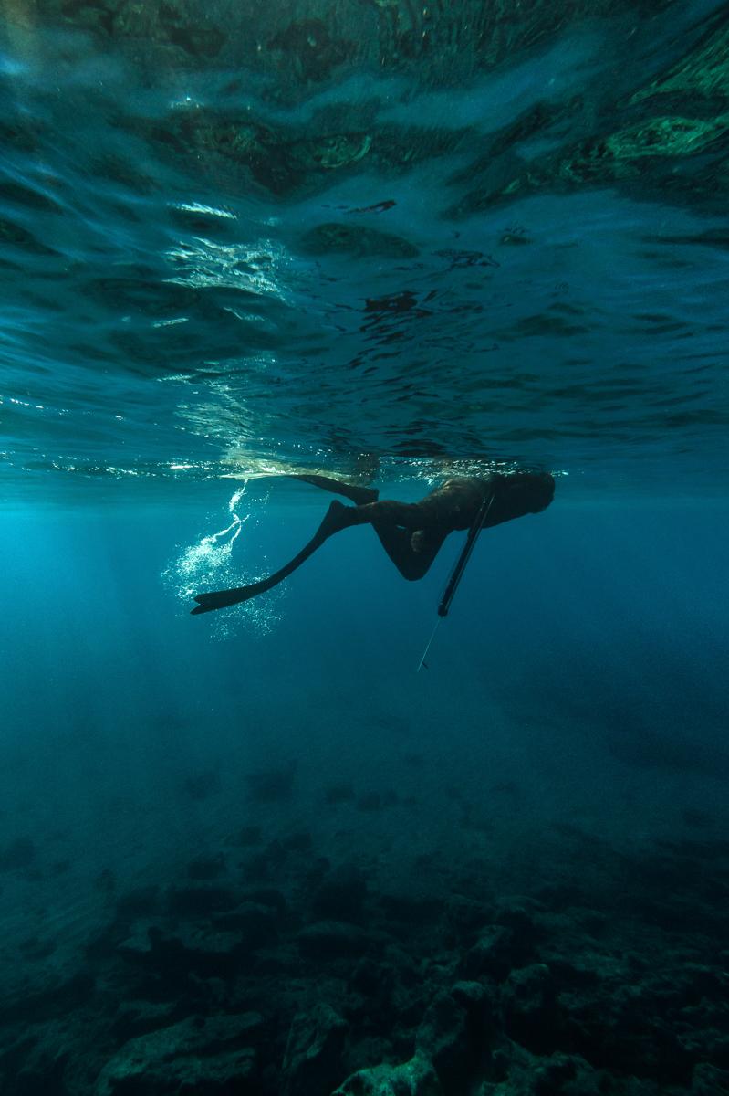 Blue Diver . . . .